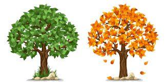 bigstock Tree in four seasons spring 80629586