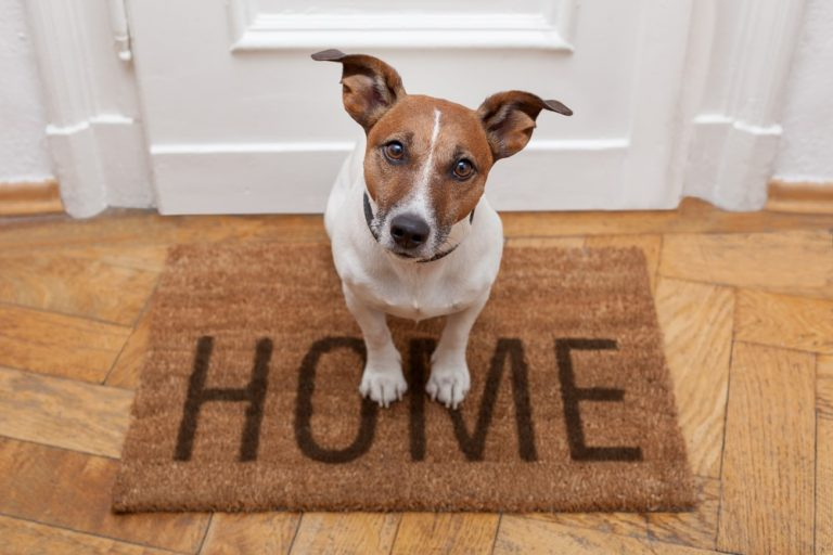 Dog Owners: Does Your House Smell Like A Flower Garden Or A Kennel?