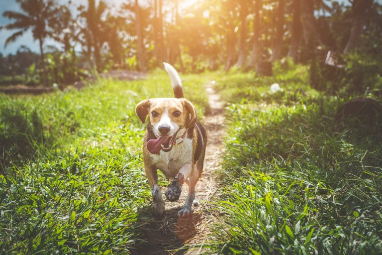Secrets To Raising A Balanced And Happy Dog