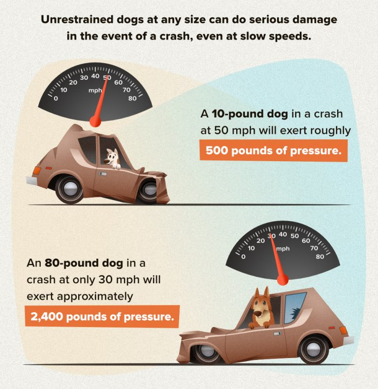 The Danger Of Distracted Driving With Your Dog: Safety Check