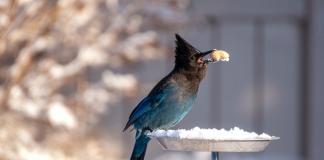 Essential Bird Watching
