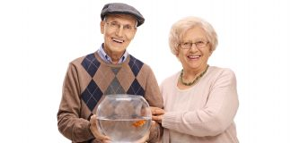 Perfect Pets for Seniors scaled